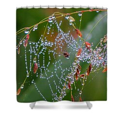 Shower Curtain featuring the photograph Dewdrop Inn by Dianne Cowen