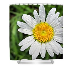 Dewey Daisy Shower Curtain