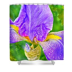 Dewey Iris Shower Curtain by Adria Trail
