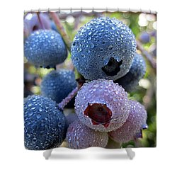 Dewy Blueberries Shower Curtain by MTBobbins Photography