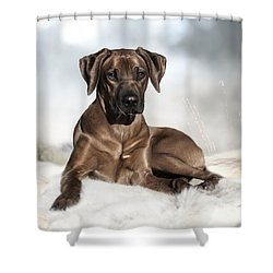 Dhiaa Rhodesian Ridgeback Shower Curtain by Lena Lottsfeldt Vincken