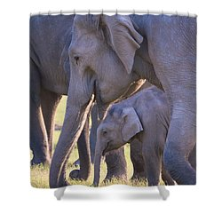 Dhikala Elephants Shower Curtain