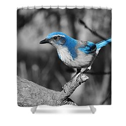 Dial Blue Shower Curtain by VLee Watson