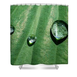 Diamonds Are Forever - Featured 3 Shower Curtain by Alexander Senin