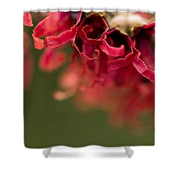 Diana The Hamamelis Shower Curtain by Anne Gilbert