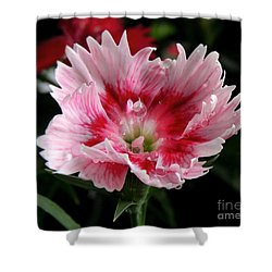 Shower Curtain featuring the photograph Dianthus by Kristine Merc