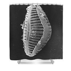 Diatom Shower Curtain by David M. Phillips