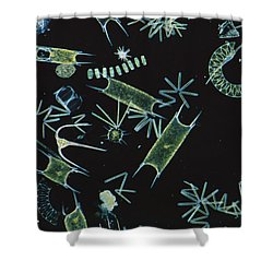 Diatoms And Dinoflagellates Shower Curtain by D P Wilson
