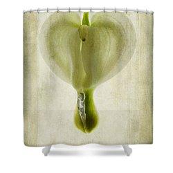 Dicentra Spectabilis Alba Shower Curtain by John Edwards