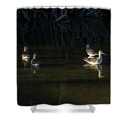 Digital Oil Of Sandpipers Shower Curtain