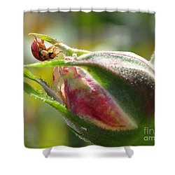 Shower Curtain featuring the photograph Dinner Is Ready by Debby Pueschel