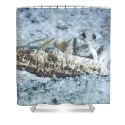 Beach Crab Snacking Shower Curtain by Belinda Lee