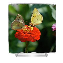 Shower Curtain featuring the photograph Dinner Table For Two Butterflies by Thomas Woolworth