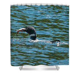 Shower Curtain featuring the photograph Dinner Time by Brenda Jacobs