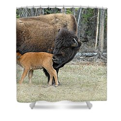 Dinner Time Shower Curtain by Dyle   Warren