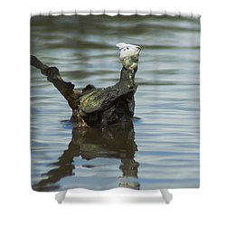 Dino Shell Shower Curtain by Kim Pate