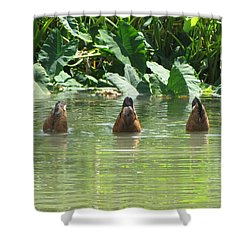 Shower Curtain featuring the photograph Dive by Beth Vincent
