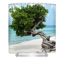 Divi Divi Tree In Aruba Shower Curtain