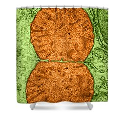 Dividing Mitochondrion Tem Shower Curtain by Don W Fawcett