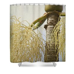 Divine Things Shower Curtain by Sharon Mau