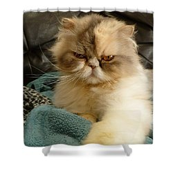 Shower Curtain featuring the photograph Do I Look Amused? by Vicki Spindler