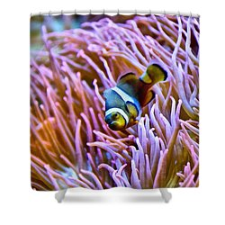Do I Look Like A Clown To You Shower Curtain by Angelina Vick