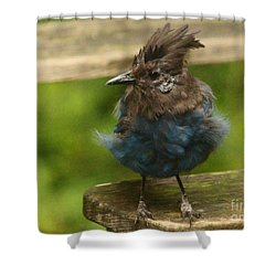 Do You Like My New Dress? Shower Curtain by Kym Backland