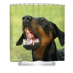 Doberman Pinscher Dog Shower Curtain by John Daniels