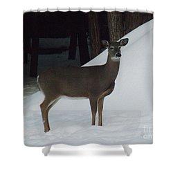 Doe A Deer Shower Curtain by Brenda Brown