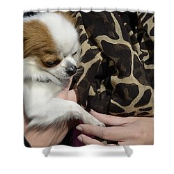 Shower Curtain featuring the photograph Dog And True Friendship 3 by Teo SITCHET-KANDA