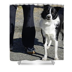 Shower Curtain featuring the photograph Dog And True Friendship 9 by Teo SITCHET-KANDA