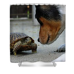 Dog And Turtle Shower Curtain by Shoal Hollingsworth