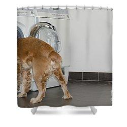 Dog And Washing Machine Shower Curtain by Mats Silvan