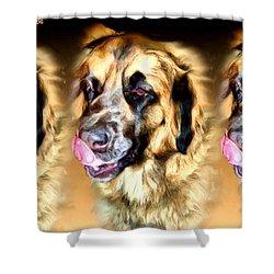 Dog Shower Curtain by Daniel Janda