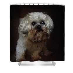 Dog In The Box Shower Curtain