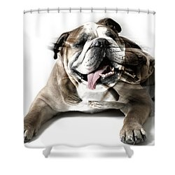 Dog Mastiff Shower Curtain