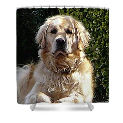 Dog On Guard Shower Curtain