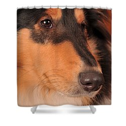 Shower Curtain featuring the photograph Dog Portrait by Randi Grace Nilsberg
