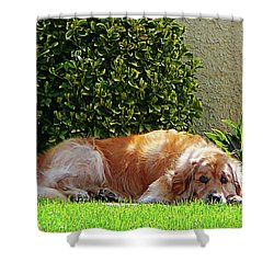 Dog Relaxing Shower Curtain by Susan Savad