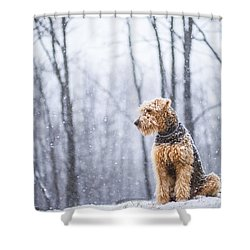Dog Sits Under The Snowfall Shower Curtain