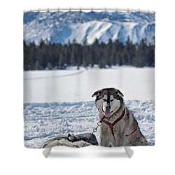 Dog Team Shower Curtain by Duncan Selby