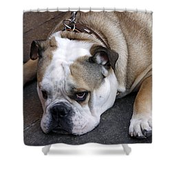 Dog. Tired. Shower Curtain