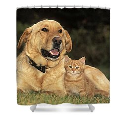 Dog With Kitten Shower Curtain by Rolf Kopfle