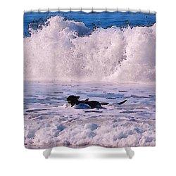 Dogs At Carmel California Beach Shower Curtain by Barbara Snyder