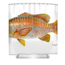 Dogtooth Snapper Shower Curtain by Carey Chen