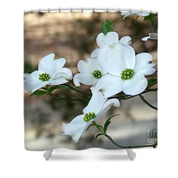 Dogwood 2 Shower Curtain by Andrea Anderegg