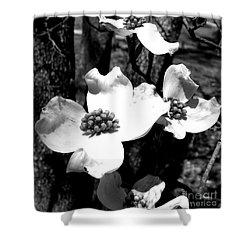 Dogwood 3 Shower Curtain by Andrea Anderegg