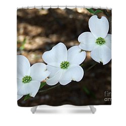 Dogwood Shower Curtain by Andrea Anderegg