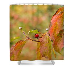 Shower Curtain featuring the photograph Dogwood Berrie by Nick Kirby