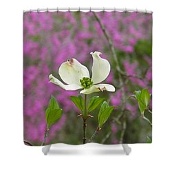 Dogwood Bloom Against A Redbud Shower Curtain by Nick Kirby